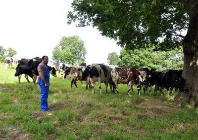 Las Quesadas Pasiegas se fabrican con leche procedente de nuestra propia granja ecológica