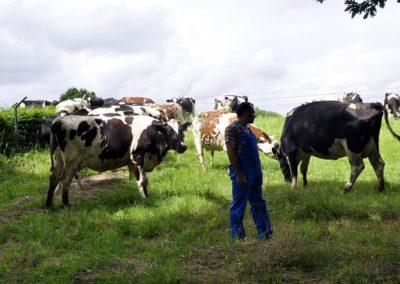 Las vacas de nuestra granja