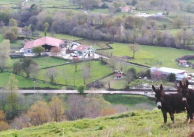 Vistas de nuestra granja junto al obrador