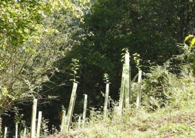 Plantación del bosque en Valdeloyés, Santo Adriano